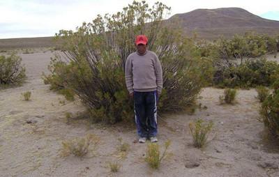 Thola shrub