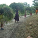 Women taking fodder from GBS project
