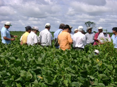 Small-Scale farmers inspecting responsibly managed soybeans (Integrated North Zone)
